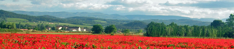 poppies_provence1